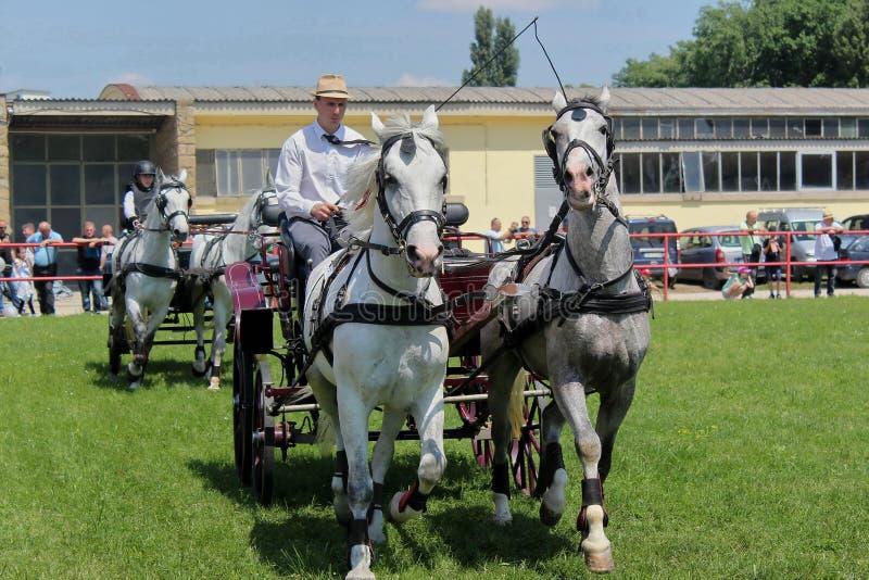 Novi Sad, Serbia, 20 05 2018 jarmark, konie z frachtem fotografia royalty free