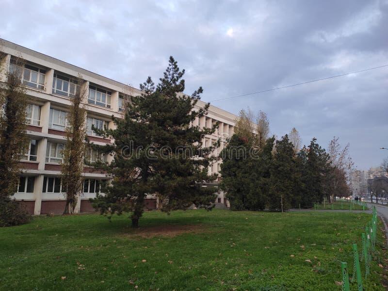Novi Sad Serbiska träd i parken på hösten royaltyfri foto