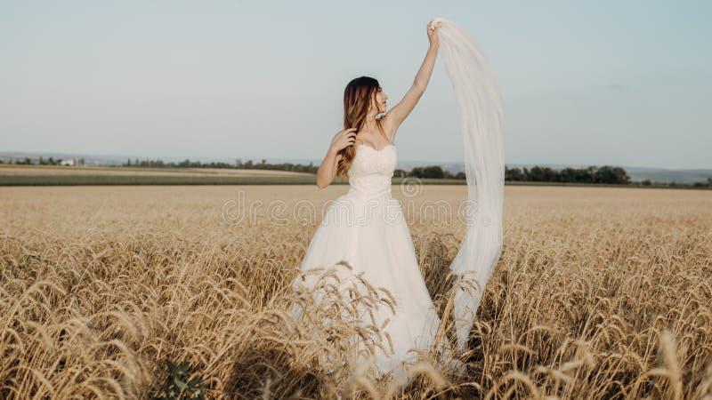 Novia hermosa en campo de trigo en puesta del sol fotografía de archivo libre de regalías