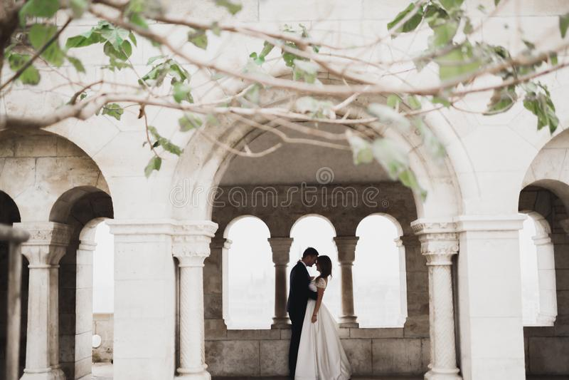 Novia perfecta de los pares, novio que presenta y que se besa en su día de boda fotos de archivo libres de regalías