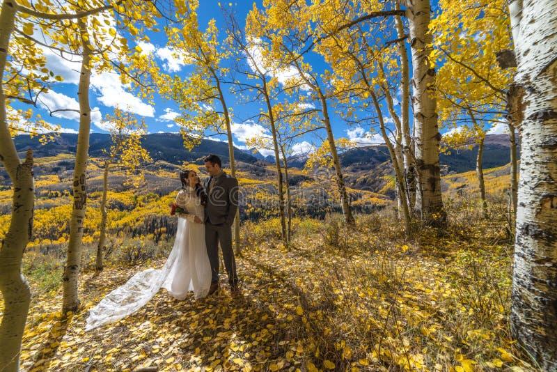 Novia vietnamita asiática con su novio en los árboles amarillos del álamo temblón del otoño de Colorado imagenes de archivo