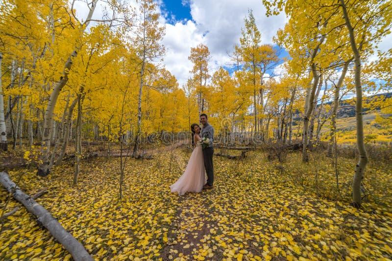 Novia vietnamita asiática con su novio en los árboles amarillos del álamo temblón del otoño de Colorado foto de archivo libre de regalías