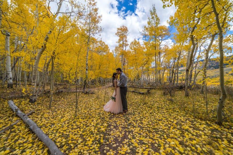 Novia vietnamita asiática con su novio en los árboles amarillos del álamo temblón del otoño de Colorado imagen de archivo libre de regalías