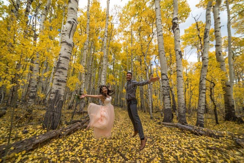 Novia vietnamita asiática con su novio en los árboles amarillos del álamo temblón del otoño de Colorado fotografía de archivo libre de regalías
