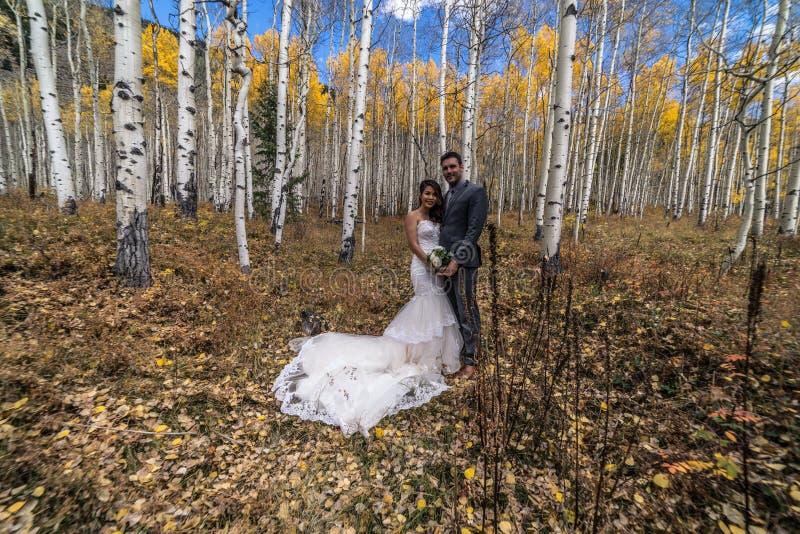 Novia vietnamita asiática con su novio en los árboles amarillos del álamo temblón del otoño de Colorado imagen de archivo