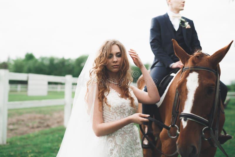 Novia y novio en bosque con los caballos Pares de la boda Retrato hermoso en naturaleza fotos de archivo