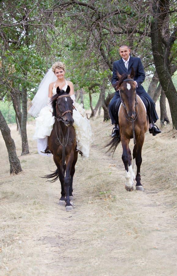 Novia y novio en los caballos foto de archivo libre de regalías