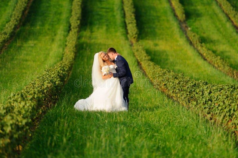 Novia y novio felices en la planta verde fotos de archivo
