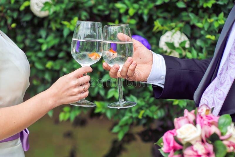 Novia y novio que sostienen los vidrios con el pez de colores imagen de archivo