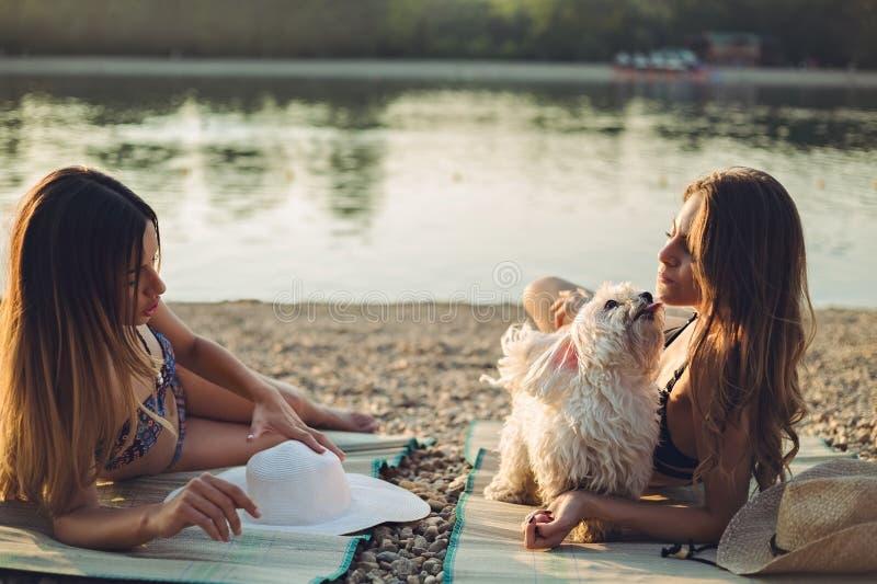 Novias con el perro que miente en la playa y hablar foto de archivo