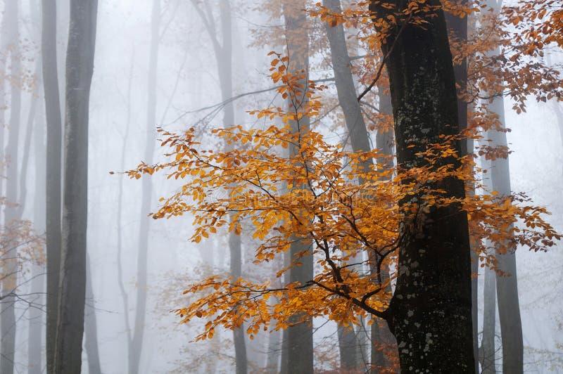 Noviembre de niebla en el bosque fotos de archivo