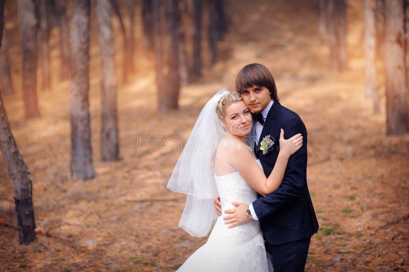 Novio de la novia en una boda un paseo en el bosque del otoño foto de archivo libre de regalías