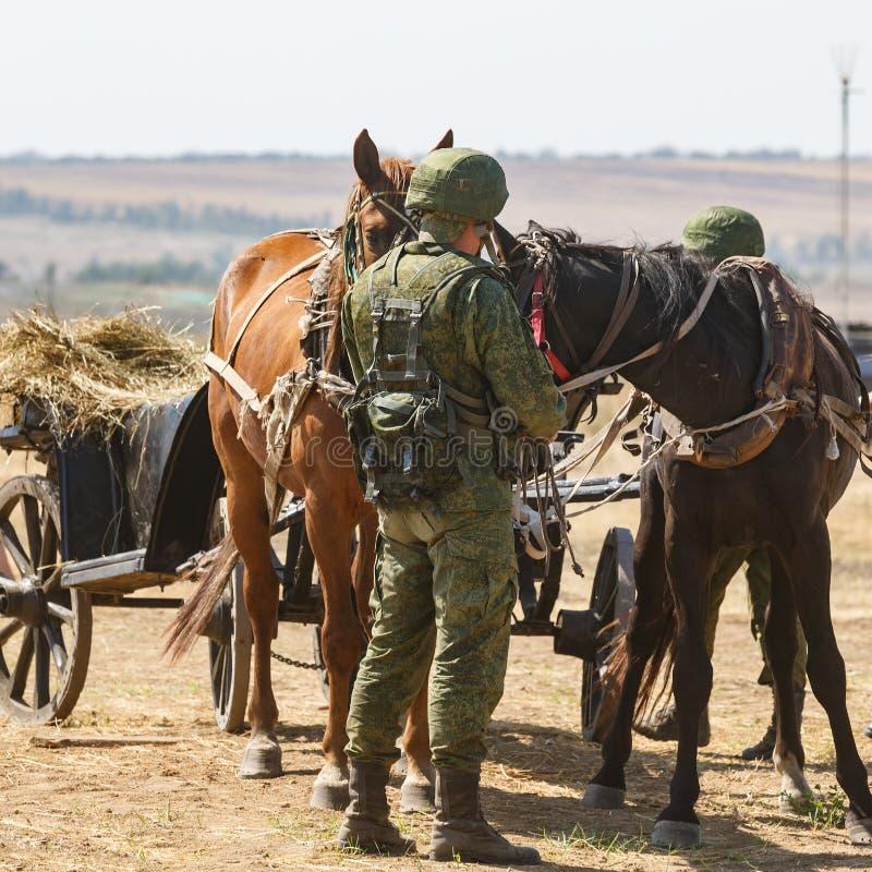 NOVOCHERKASSK, ROSJA, 26 2017 SIERPIEŃ: Nowożytny Rosyjski żołnierz w pełnym kamuflażu mundurze karmi konie obrazy royalty free