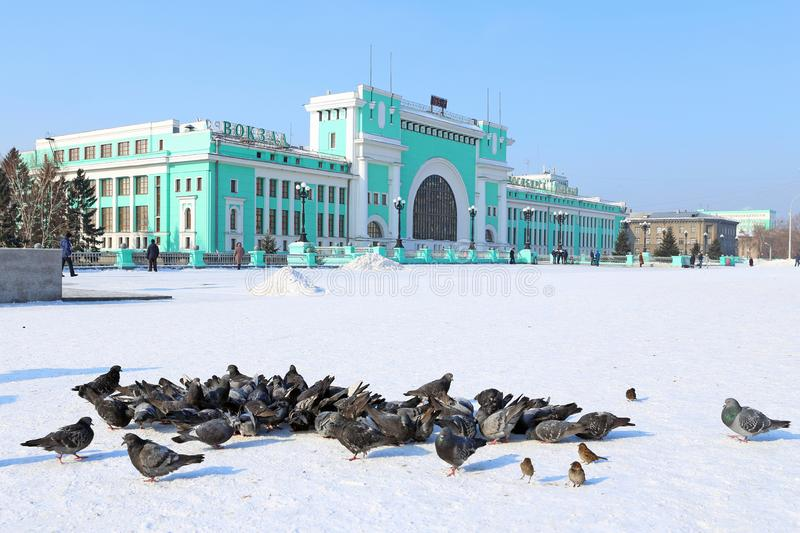 The pigeons in the forecourt of a Sunny frosty day in Novosibirsk. Novosibirsk, RUSSIA-FEBRUARY 21, 2016: Garin-Mikhailovsky Square and Novosibirsk-Glavny train stock image