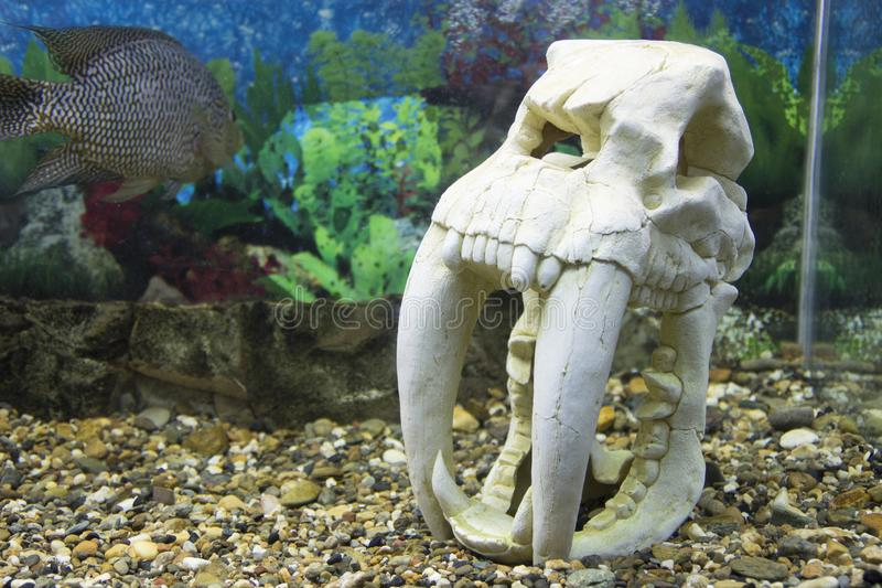 Novosibirsk Zoological Park. Aquarium with fish and plants. royalty free stock photos