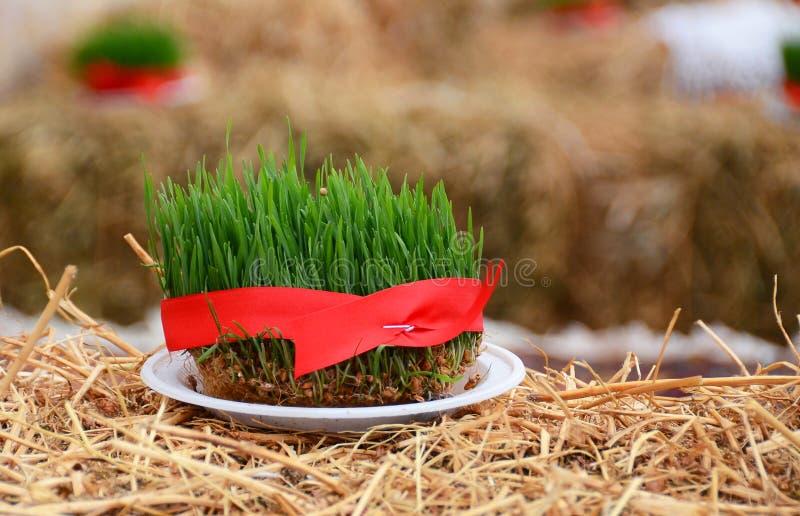 A seminal siege on a red ribbon on a dry grass . Novruz national Azerbaijan holiday spring new year celebration concept, wheat gra. Novruz national Azerbaijan stock images