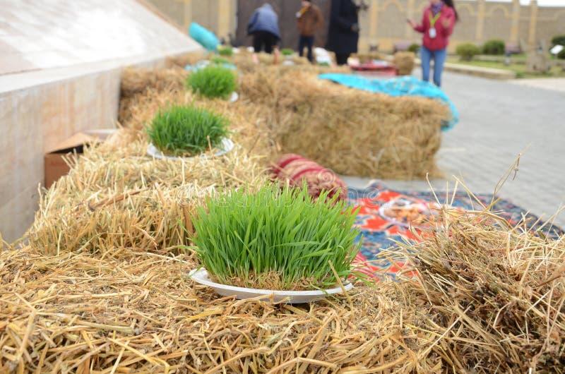 A seminal siege on a red ribbon on a dry grass. Novruz national Azerbaijan holiday spring new year celebration concept, wheat grass semeni . A seminal siege on a royalty free stock photo