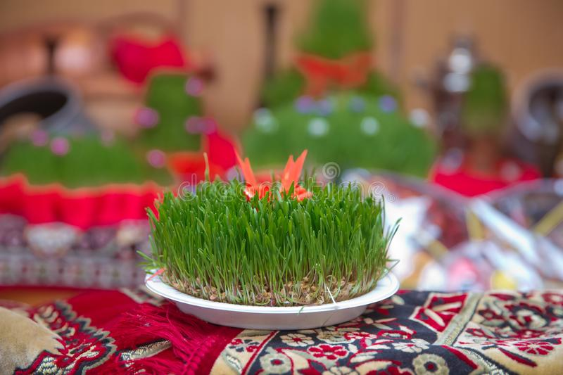 Novruz national Azerbaijan holiday spring new year celebration concept, wheat grass semeni . A seminal siege on a red ribbon on a. A seminal floor on a red royalty free stock image