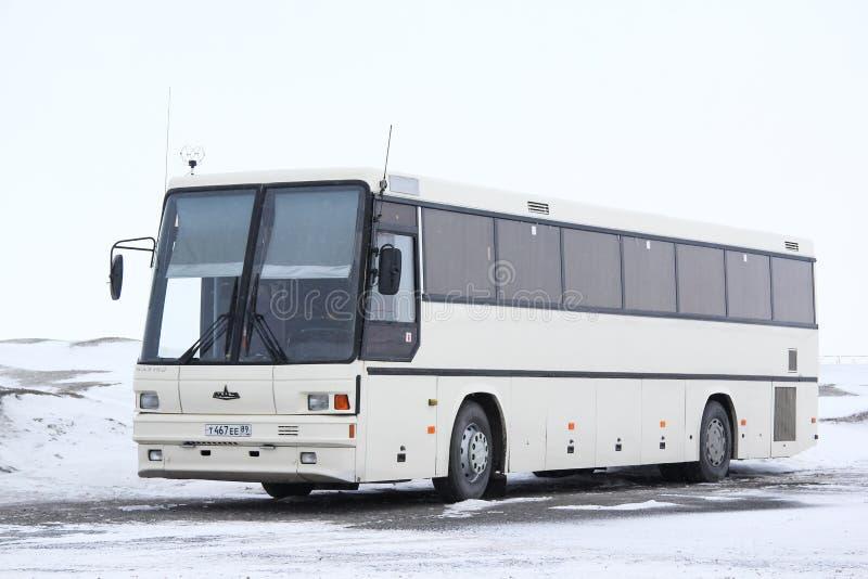 Maz 152 Vazola. Novyy Urengoy, Russia - April 28, 2015: White coach bus Maz 152 Vazola at the interurban road stock photo