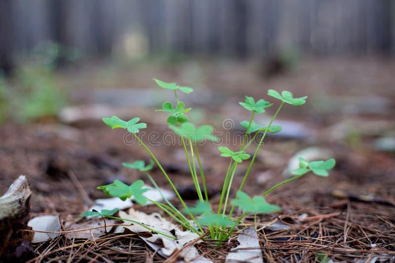 Nowa dorośnięcie roślina obrazy stock