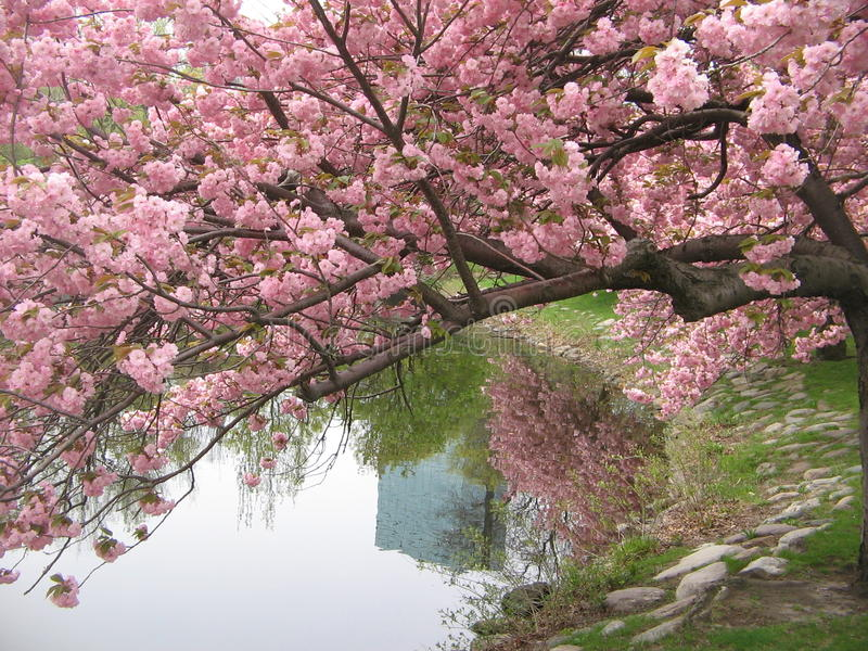nowa England wiosna obrazy royalty free