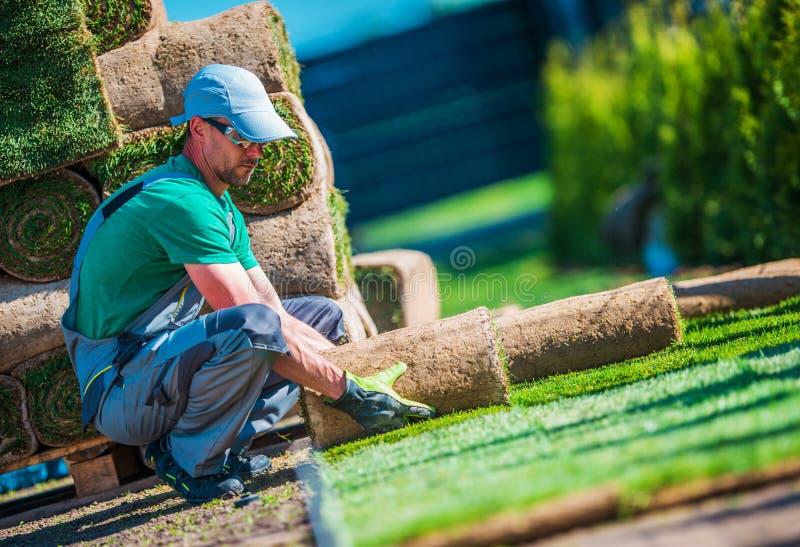 Nowa murawy trawy instalacja obraz stock