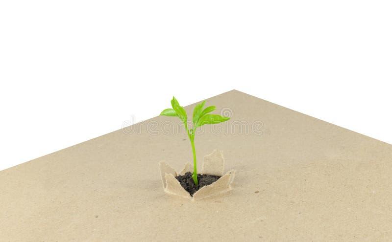 nowa roślina obrazy stock