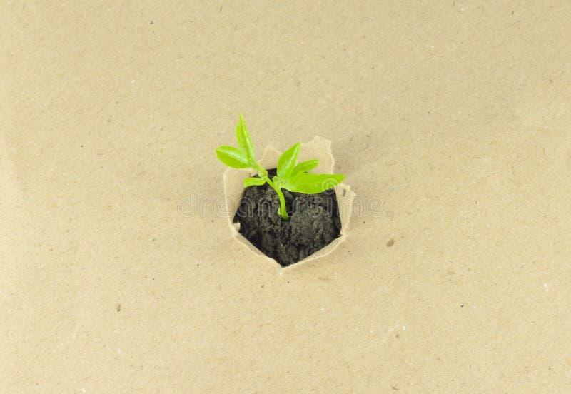 nowa roślina zdjęcie royalty free