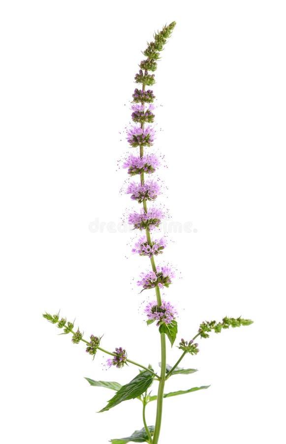 Nowa roślina z kwiatami obrazy royalty free