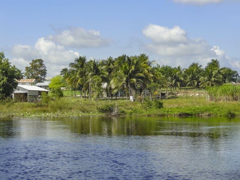 Nowa rzeka w Belize fotografia royalty free