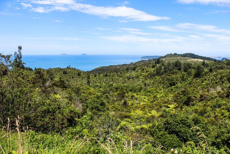 Nowa Zelandia w lecie fotografia royalty free
