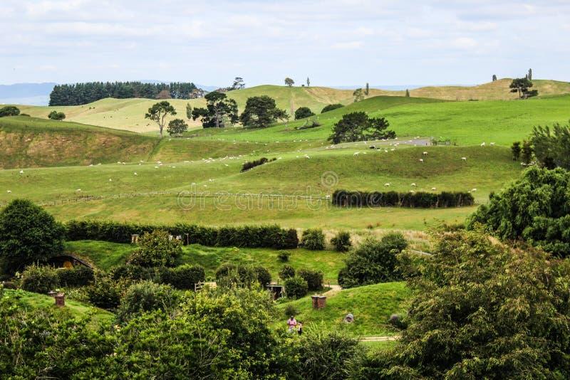 Nowa Zelandia w lecie zdjęcie stock