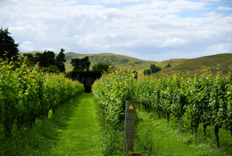 Nowa Zelandia winnica zdjęcia stock