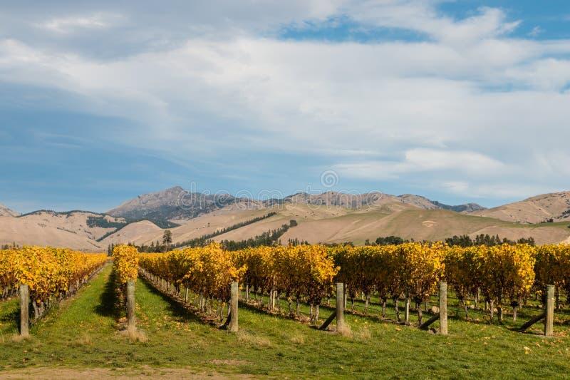 Nowa Zelandia winnica w jesieni fotografia royalty free