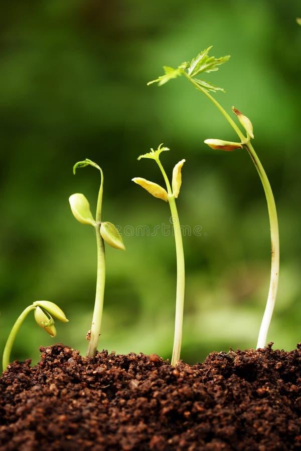 nowe życie rośliny obraz royalty free