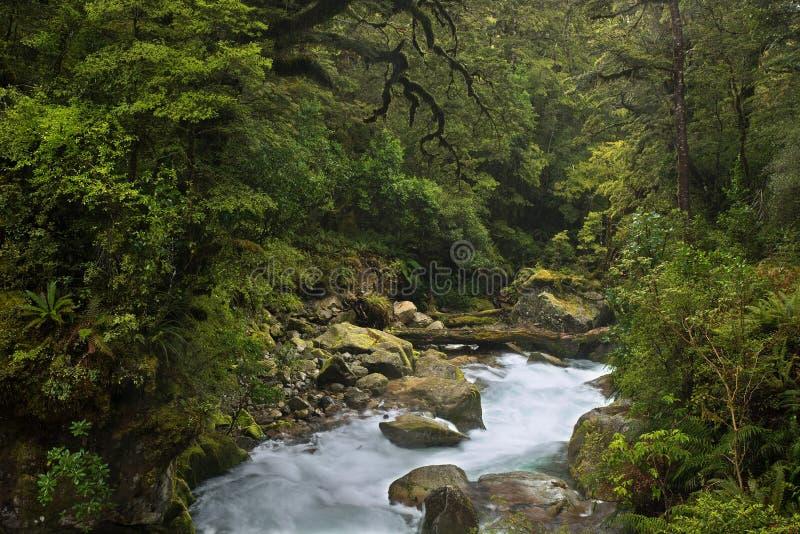 nowe Zelandii fotografia royalty free