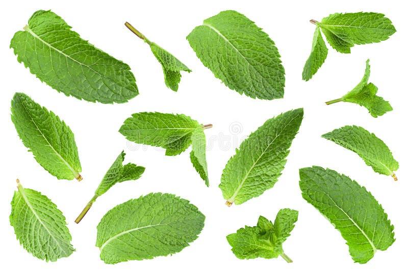 Nowego liścia zbliżenia zielarska kolekcja fotografia stock