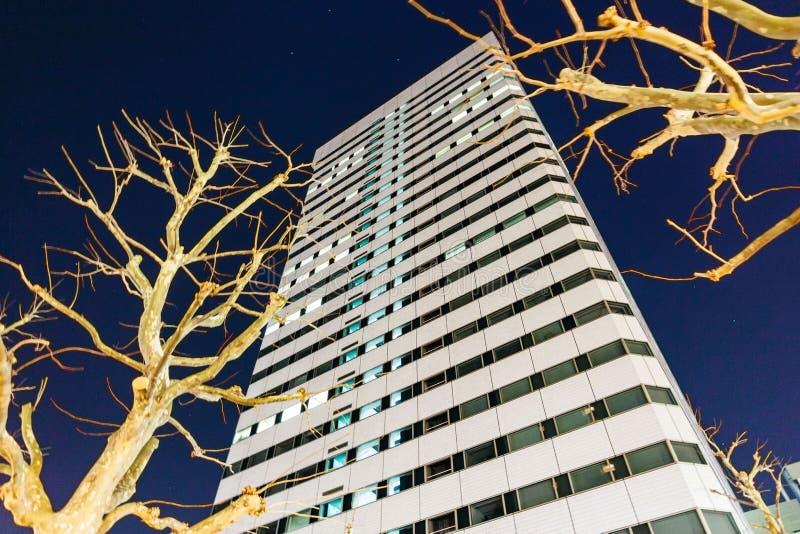 Nowożytny budynek z Bezlistnymi drzewami które patrzeją spod spodu przy nocą w Sapporo, hokkaido, Japonia obraz royalty free