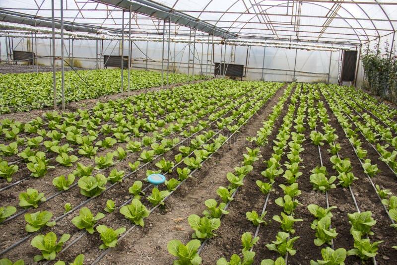 Nowożytny gospodarstwo rolne dla narastającej sałaty obrazy royalty free