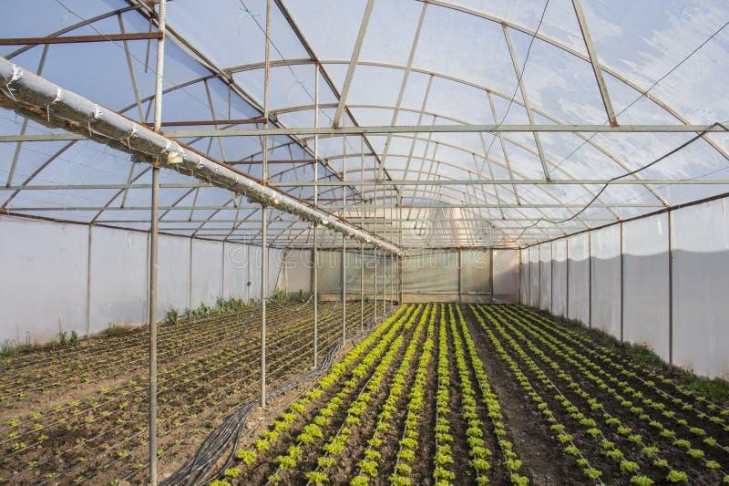 Nowożytny gospodarstwo rolne dla narastającej sałaty obrazy stock