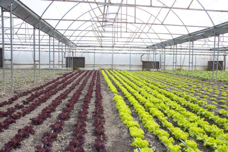 Nowożytny gospodarstwo rolne dla narastającej sałaty zdjęcia stock
