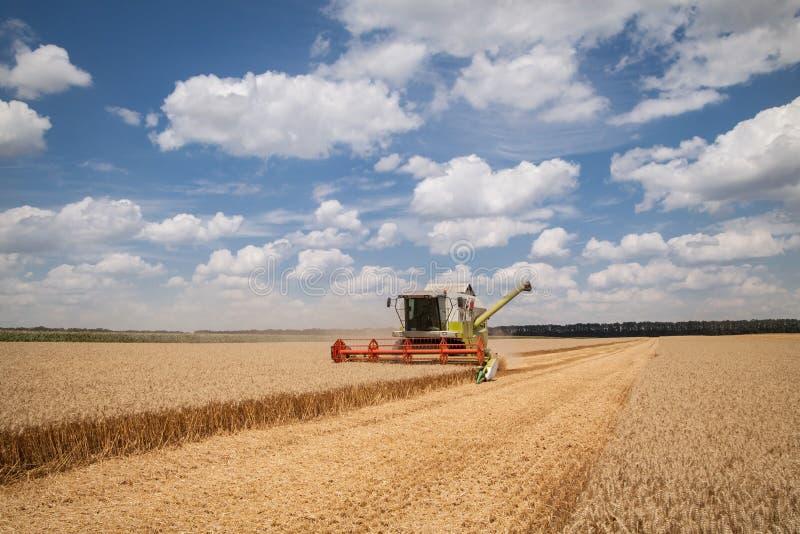 Nowożytny syndykat zbiera na pszenicznym polu (żniwiarz) fotografia royalty free