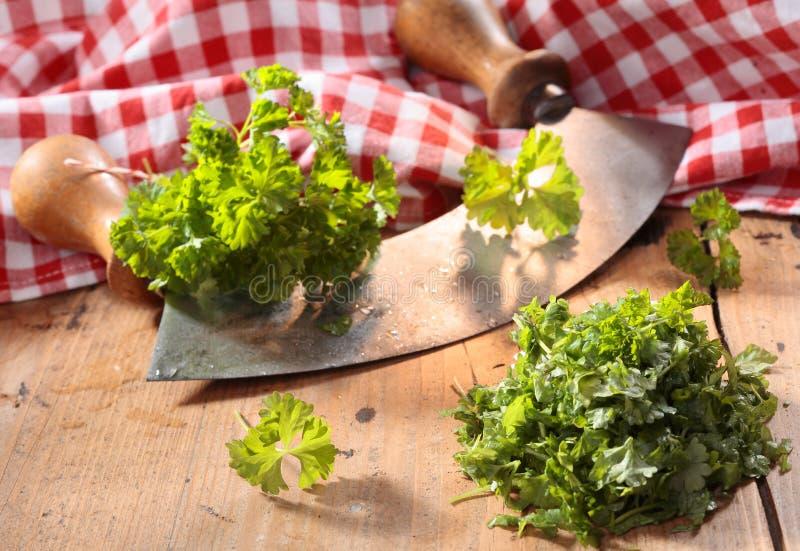 Nowożytny zielarski krajacz z drewnianymi rękojeściami (wiegemes) fotografia stock