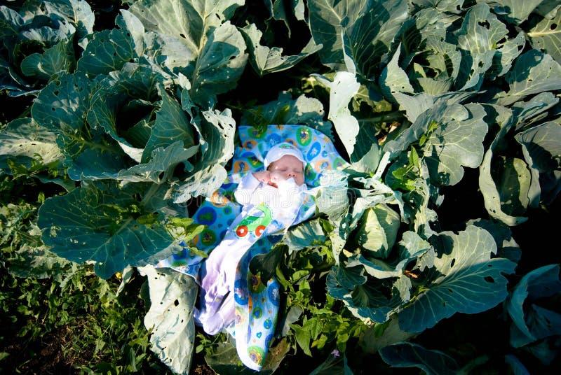 Nowonarodzony dziecko wśród kapust w ogródzie zdjęcie stock