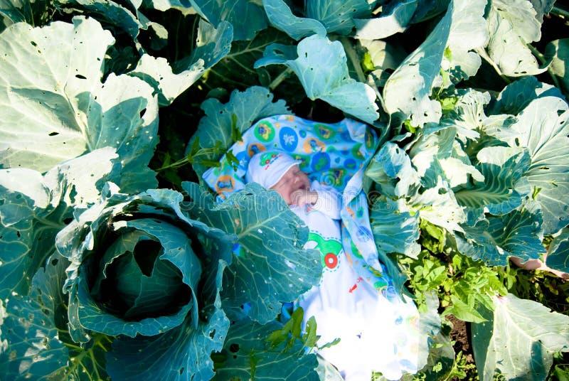Nowonarodzony dziecko wśród kapust w ogródzie zdjęcie royalty free