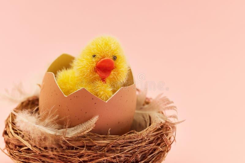 Nowonarodzony kurczątko klujący się od jajka fotografia royalty free