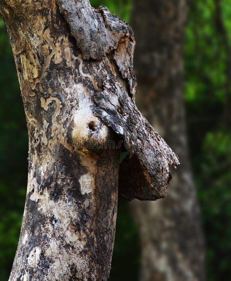 Nowotwór piersi świadomość od natury obrazy stock