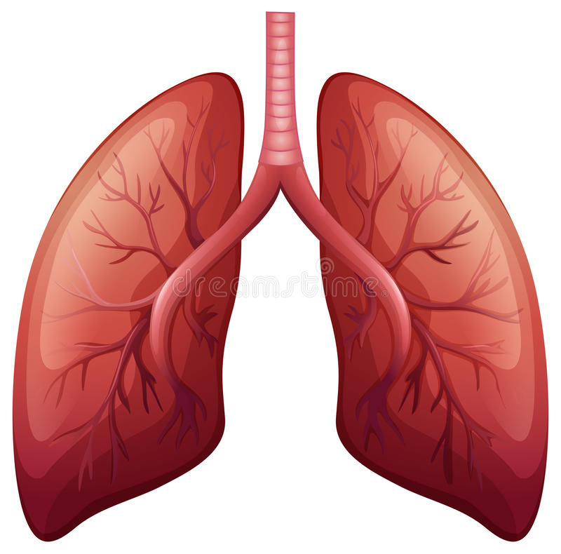 Nowotworu płuc diagram w szczególe ilustracja wektor