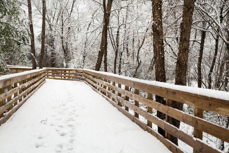 Nowy śnieżny spadek w zima lesie zdjęcia royalty free