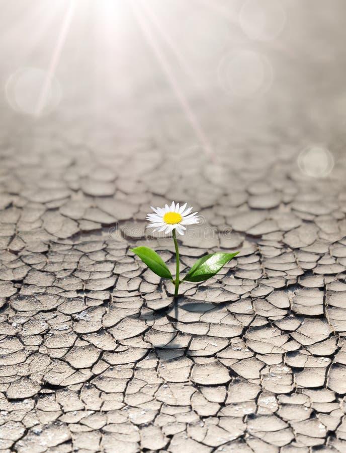 Nowy życie w suchej ziemi obraz stock